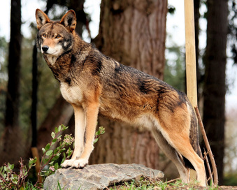 What Are All The Different Types Of Wolves